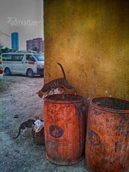 Streets of Ajman 2 by amirajuli