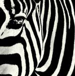 Stripes by Schneeengel