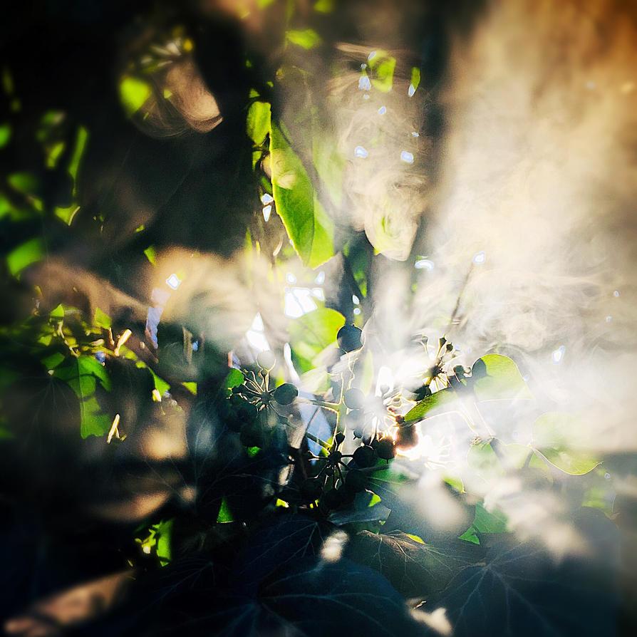 Foggy Lightshow by Schneeengel