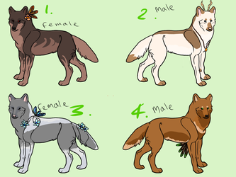 Wolf Adopts OPEN