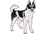 Husky Adopt - CLOSED