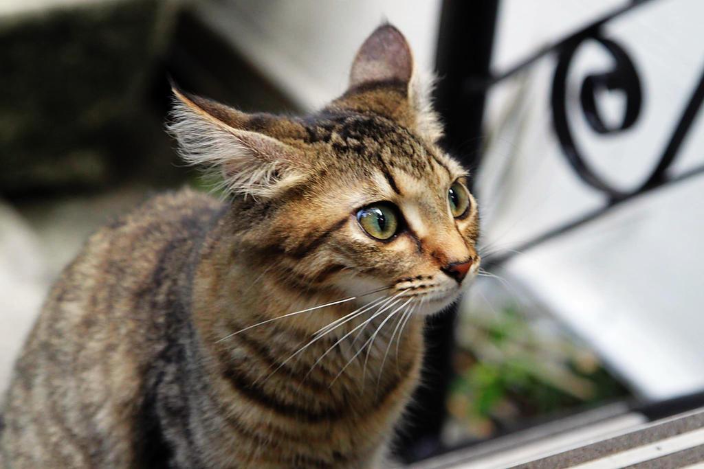 Hemingway Cat by uvadtmfub