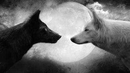 Black and White by MachiavelliCro