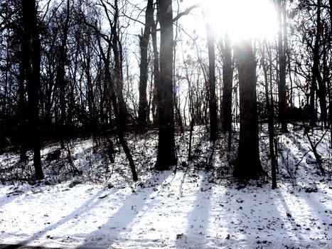 A Winter's Midday Stroll