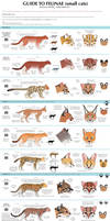 Guide to Little Cats