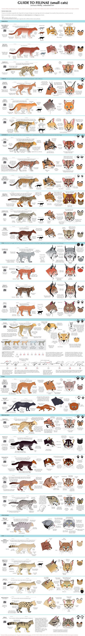 Guide to Little Cats by Majnouna