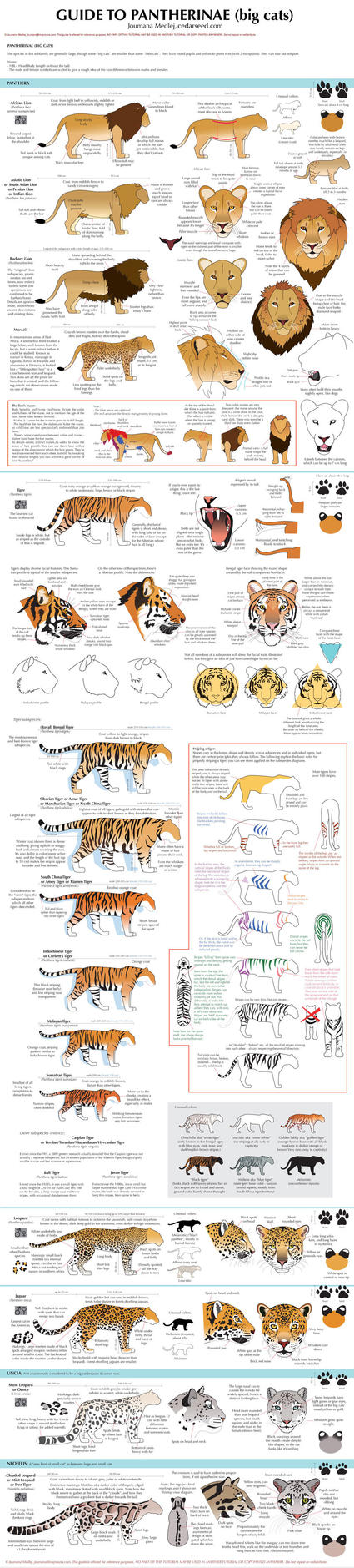 Guide to Big cats by Majnouna