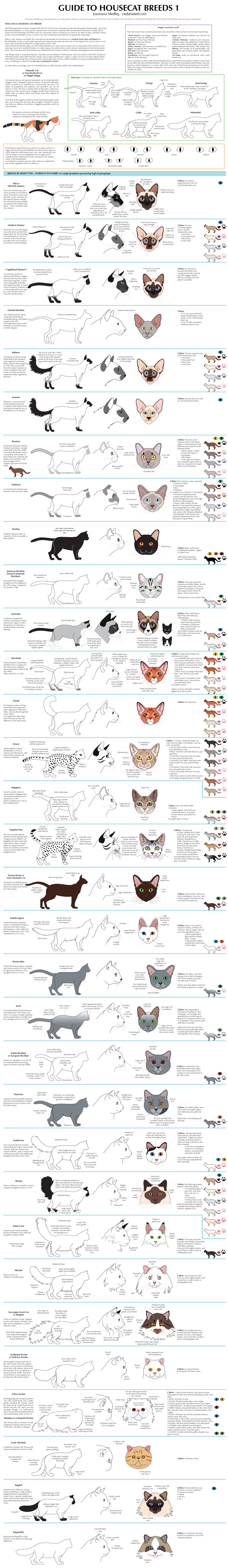 Guide to Housecat Breeds 1 by Majnouna