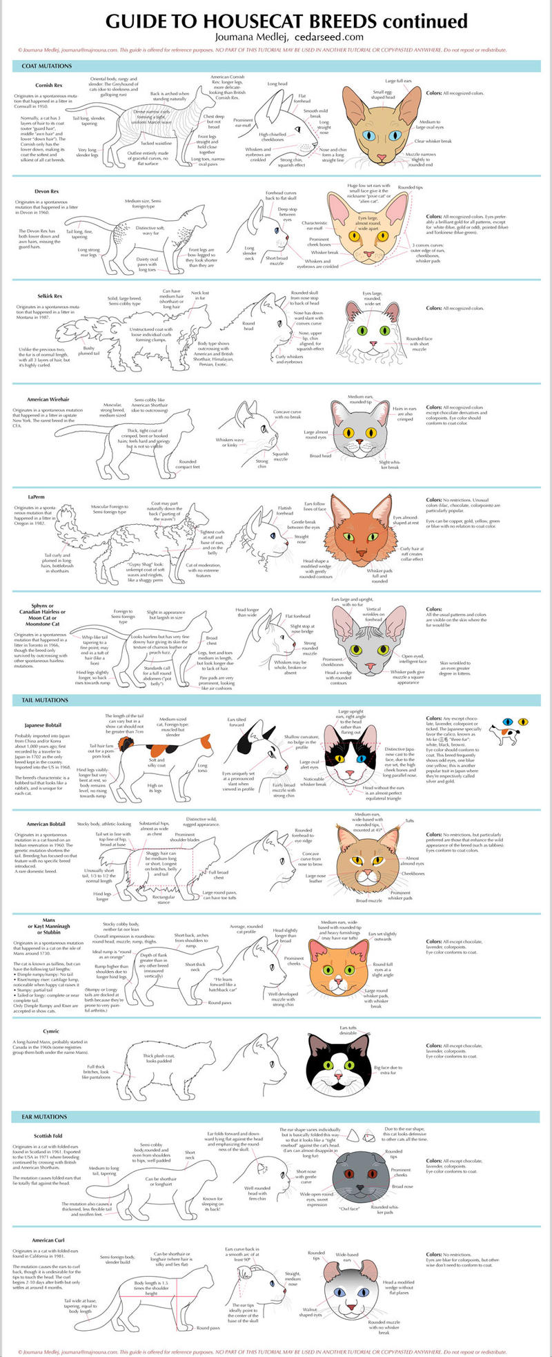 Guide to Housecat Breeds 2 by Majnouna on DeviantArt