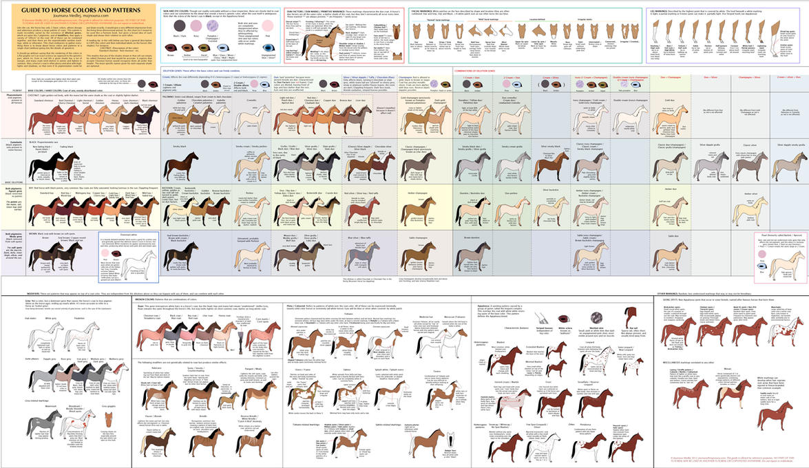Guide to Horse Colors and Patterns by Majnouna on DeviantArt - photo#25