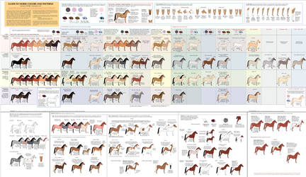 Guide to Horse Colors and Patterns