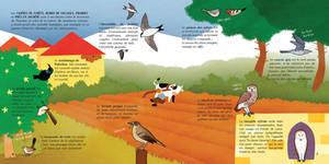 Birds of Lebanon pp6-7