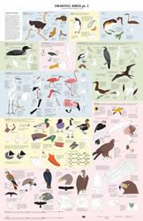 Drawing Birds part 2 by Majnouna