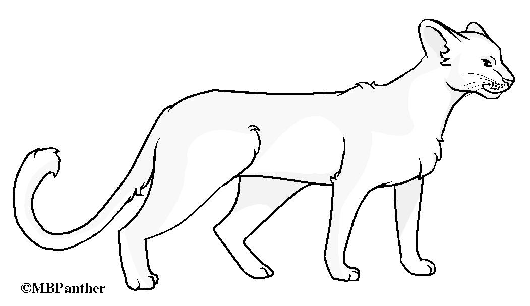 how to draw a puma
