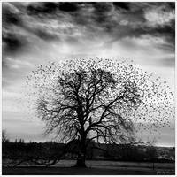 The Birds... by Michel-Lag-Chavarria