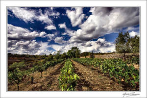 My vineyard today... by Michel-Lag-Chavarria