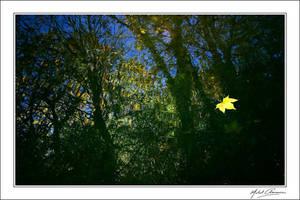 Fallen star...
