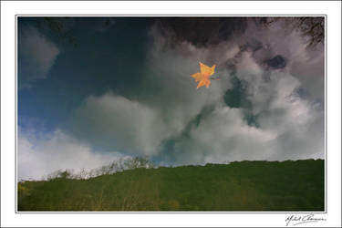 The evening star... by Michel-Lag-Chavarria