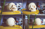 my skull ref by Gimaldinov