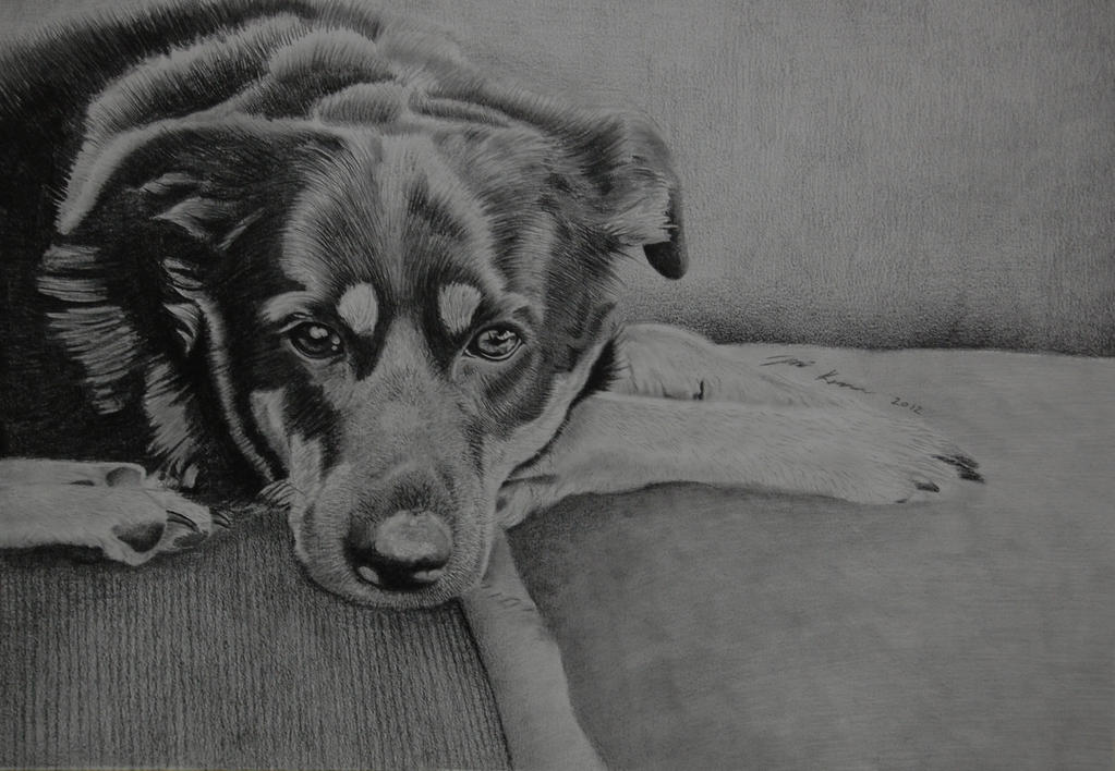 Dog by AdioSlave