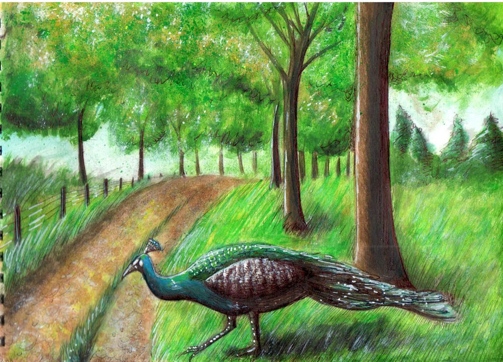 Peacock by lostdesertfan