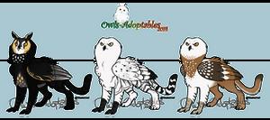 02 Owl Griffins - OPEN