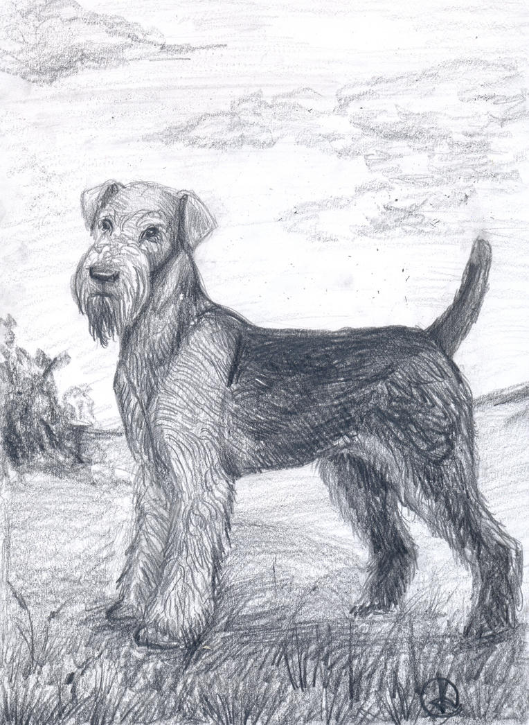Airedale terrier by IPPO-Lita on DeviantArt