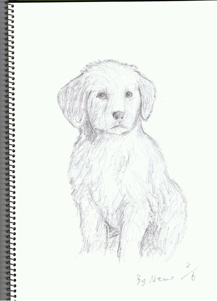 Uncategorized Golden Retriever Drawings a golden retriever puppy by acinonyx jubatus on deviantart jubatus