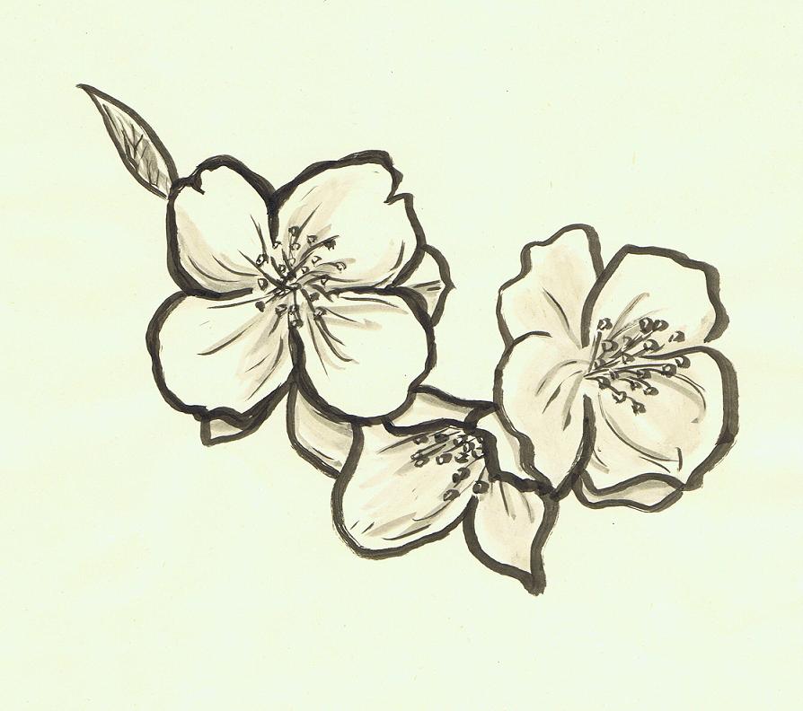 Chinese Flower Line Drawing : Jasmine flower by acinonyx jubatus on deviantart