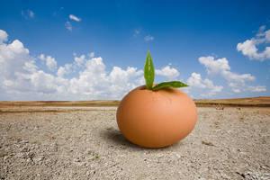 Egg by mahirates