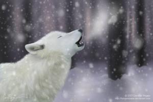 Wolf by fishtankbabe