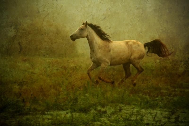 Wild horse.... by EMCoetzee