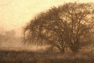Early morning mist by EMCoetzee