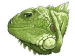 the iguana by DQuaro