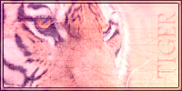 Tiger Signature by Taryn2007