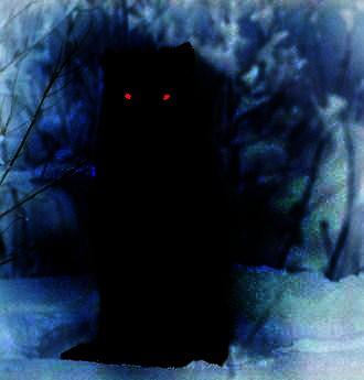 Dark Shadow Wolf By Mel L92
