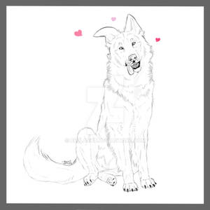 Sir Loves A Lot - Canine Drawing