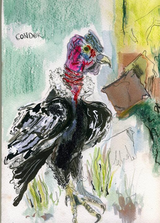 condor by frecklehammer