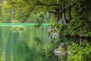 green place by Mark-Heather