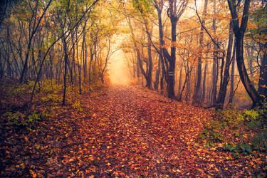 autumn by Mark-Heather