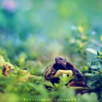 Fury the Tortoise