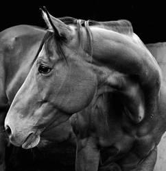 Horse Portrait by pietromorello78