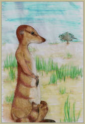 Meerkat by chaded