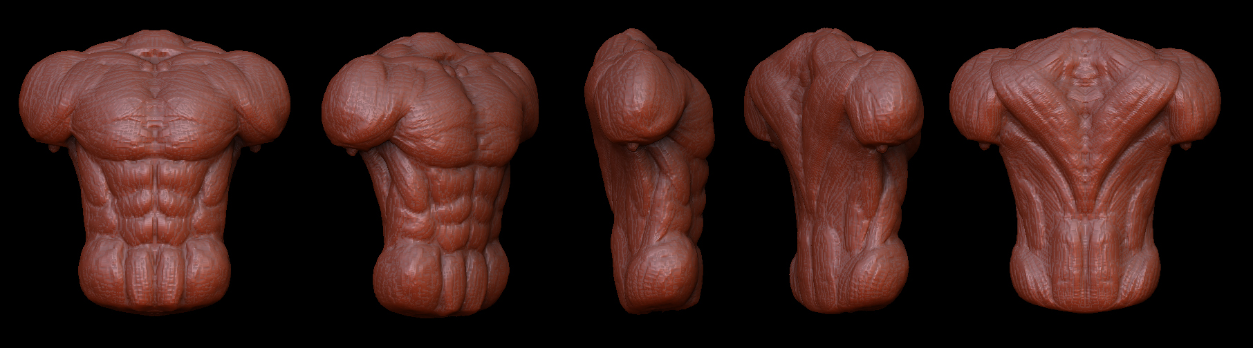 Zbrush Torso Muscle Study By Sentimentalfreak On Deviantart