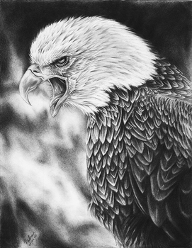 Screaming Eagle Drawing