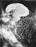 Screaming Eagle Drawing by ErnestoVladimir
