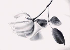 Te regalo by ErnestoVladimir