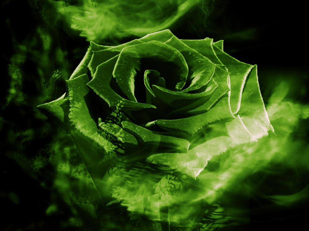 Спокойной, картинки с зелеными розами