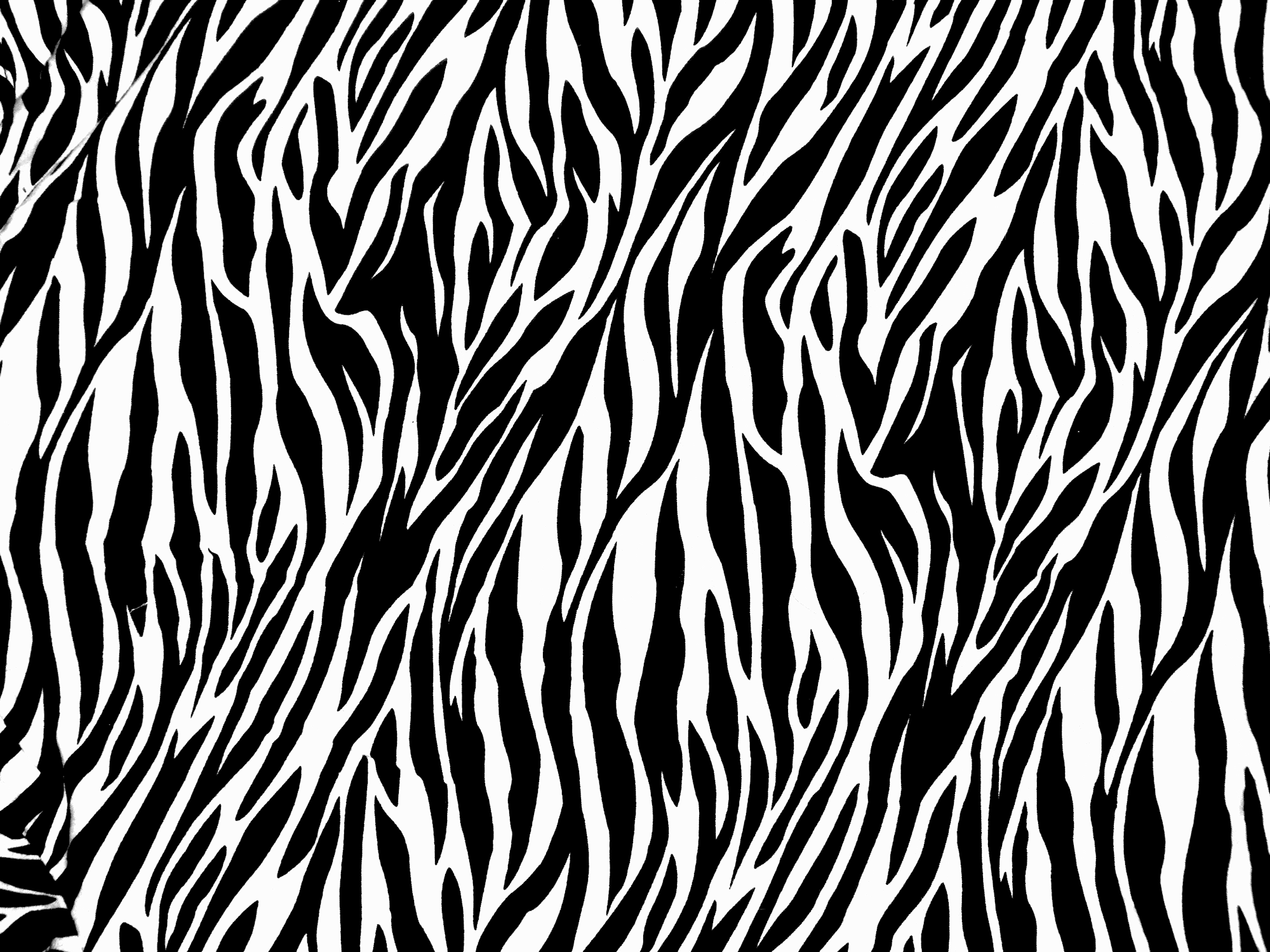 zebra print texture by ghoulskout