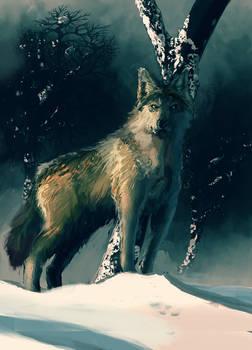 097 Wolf